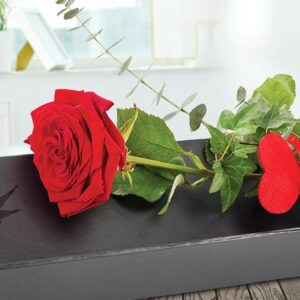 Image of single red rose perfect for Valentines day